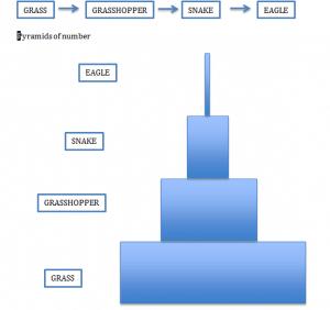Pyramids of number